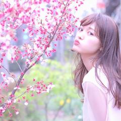 ピンク セミロング 春 フェミニン ヘアスタイルや髪型の写真・画像