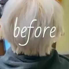 モード メンズマッシュ メンズカット デザインカラー ヘアスタイルや髪型の写真・画像
